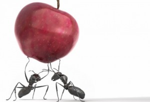 Image of two ants lifting a red apple to symbolize contributing to building knowledge. Free image.